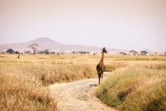 Giraf in Serengeti wordt geïsoleerd die Royalty-vrije Stock Afbeelding