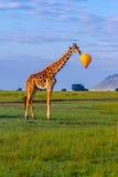 Girafa do Masai com bolha do discurso fotografia de stock