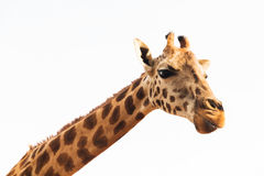 Girafa em África Imagens de Stock