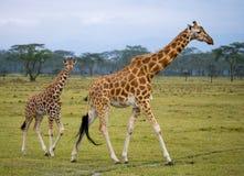 Girafa fêmea com um bebê no savana kenya tanzânia East Africa fotos de stock