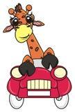 Girafa no carro Fotos de Stock Royalty Free