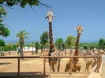 Girafa no jardim zoológico Itália do safari do apulia de Fasano imagens de stock