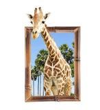Girafa no quadro de bambu com efeito 3d Imagem de Stock