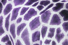 Girafa roxo imagem de stock royalty free