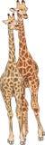 Girafas do vetor Imagens de Stock Royalty Free