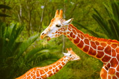 Girafas III Foto de Stock Royalty Free