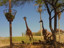 Girafas na tundra Fotografia de Stock Royalty Free