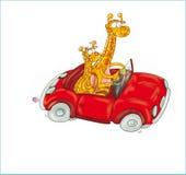 Girafas no botão ou no ícone do humorista da ilustração colorida do carro para o Web site Fotografia de Stock Royalty Free