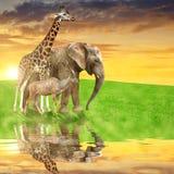 Girafe, éléphant et Kudu Photos stock
