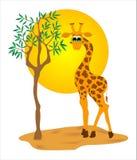 Girafe Photos libres de droits