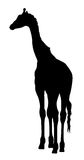 Girafe. Abstract vector illustration of an girafe silhouette. The tail of the giraffe is a separate element and can be moved to different locations Royalty Free Stock Photos