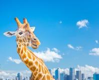 Girafe avec la vue de ville Images stock