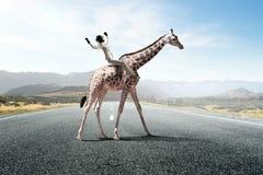 Girafe d'équitation de femme d'affaires Media mélangé Media mélangé Image stock