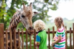Girafe d'alimentation d'enfants au zoo Enfants au parc de safari photos stock