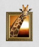 Girafe dans le cadre avec l'effet 3d Photographie stock
