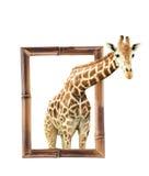 Girafe dans le cadre en bambou avec l'effet 3d Image libre de droits