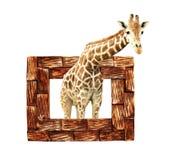 Girafe dans le cadre en bois avec l'effet 3d Photos stock