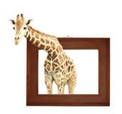 Girafe dans le cadre en bois avec l'effet 3d Images stock