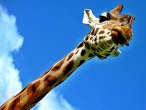 Girafe dans le ciel Images libres de droits