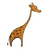 Girafe drôle de bande dessinée sur le fond blanc. Vecteur Images libres de droits