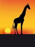 Girafe et coucher du soleil Images stock