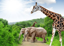 Girafe et éléphants Photo stock