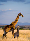 Girafe femelle avec un bébé dans la savane kenya tanzania La Tanzanie photo stock