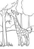 Girafe mangeant des feuilles de l'arbre Photos stock