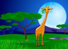Girafe mangeant des feuilles en Afrique au coucher du soleil Image stock
