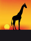 Girafe and sunset. Nice illustration of giraffe at sunset in africa Stock Images