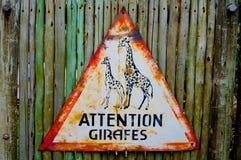 Girafes d'attention - panneau routier de triangle de girafes image stock