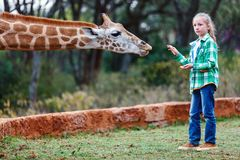 Girafes de alimentation d'ado en Afrique Images libres de droits