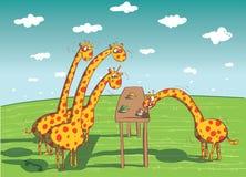Girafes mangeant le dîner Image libre de droits