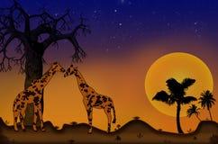 Girafes sur un beau fond de coucher du soleil Image libre de droits