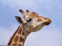 giraff Royaltyfria Bilder