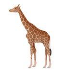 giraff Arkivfoton