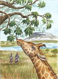 Giraff, aboriginer och Kilimangaro Royaltyfri Bild