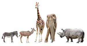 Giraff, elefant, noshörning, kudu och sebra Arkivbild