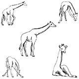 giraff en skissa vid handen white för tree för bakgrundsteckningsblyertspenna Royaltyfri Bild