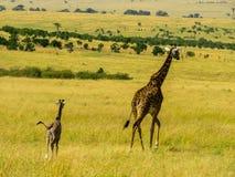 Giraff-Familie Lizenzfreies Stockfoto