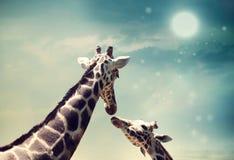 Giraff i kamratskap- eller förälskelsebegreppsbild Arkivbilder