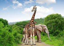 Giraff och elefanter Arkivbilder