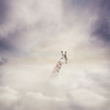 Giraff och moln Arkivfoto