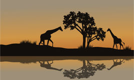 Giraff på solnedgånglandskap Arkivfoton