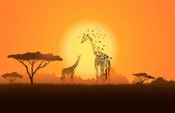 Giraffa con il suo bambino Fotografie Stock