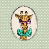Giraffa dei pantaloni a vita bassa Fotografie Stock