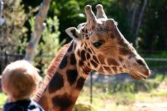 Giraffa di Baringo Fotografia Stock