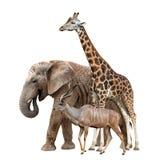 Giraffa, elefante e Kudu Fotografia Stock