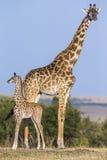 Giraffa femminile con un bambino nella savana kenya tanzania La Tanzania fotografia stock libera da diritti