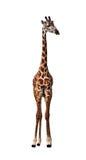 Giraffa lunga del collo isolata su bianco Fotografia Stock